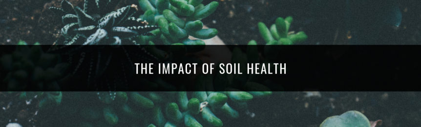 Pathfinders - impact of Soil Health
