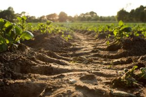 the importance of soil health, picture of dirt and grass